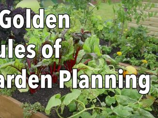 5 Golden Rules of Garden Planning