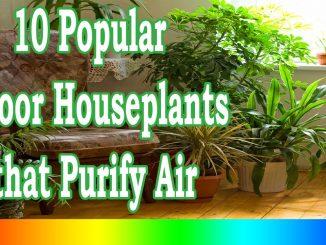 Best Indoor Plants – 10 Popular Indoor Houseplants that Purify Air