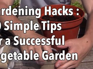Gardening Hacks – 10 Simple Tips for a Successful Vegetable Garden