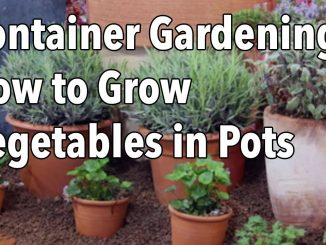 Container Gardening – Top Tips for Success