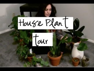 House plants tour easy indoor plants to purify the air