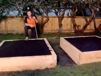 How to Build a Raised Vegetable Garden | Mitre 10 Easy As