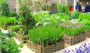 Getting the Best Container Gardening Herbs