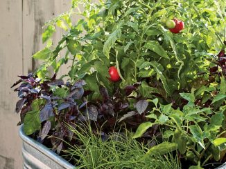 The Importance of Vegetable Container Gardening Ideas