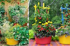 Container Gardening Vegetable Ideas