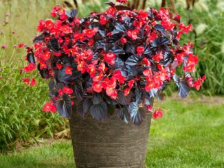 large container gardening
