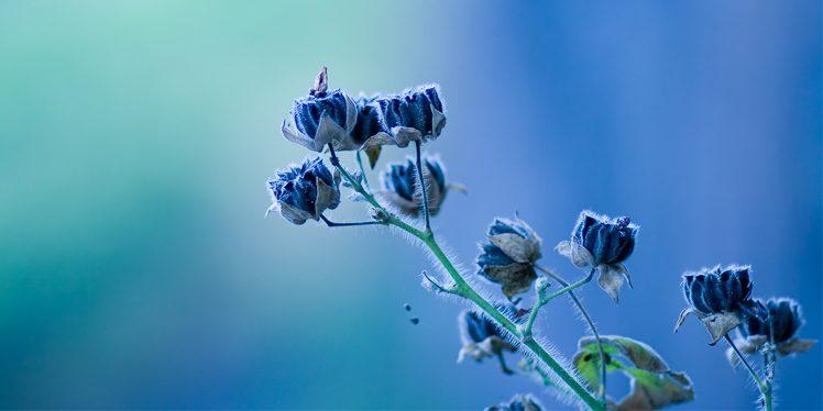 beautiful rare flowers